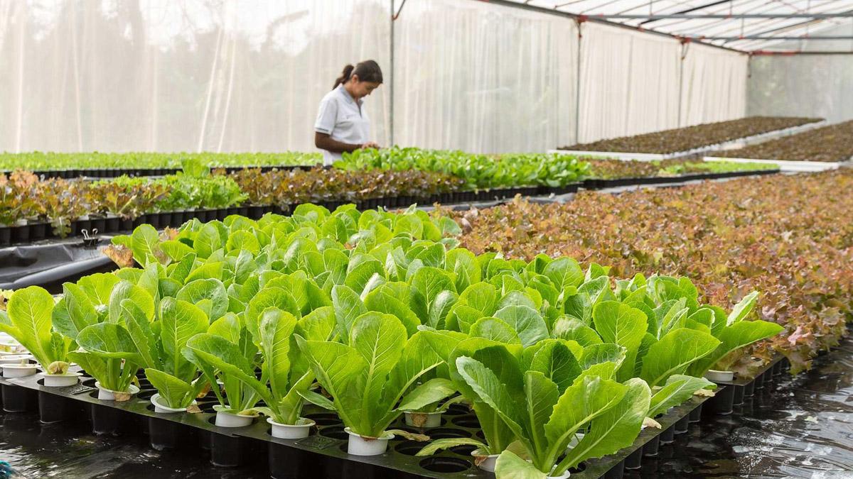 https://agroekoteknologi.unja.ac.id/wp-content/uploads/2021/10/agroekoteknologi3.jpg